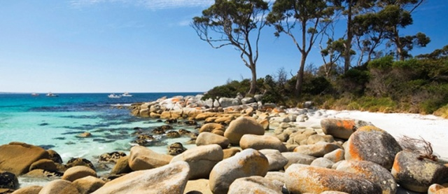 Bay of Fires is a series of bays of white sand, crystal water and rocks turned red from lichen clamping themselves on.