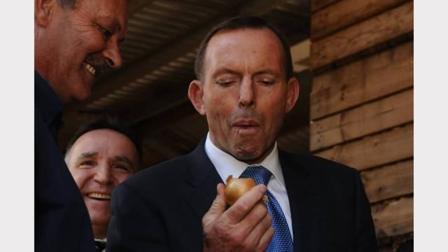 Tony Abbott showed support for the Tasmanian onion industry by eating one. Whole. Unpeeled.